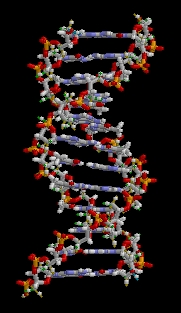 DNA structure (c) Wikimedia Commons - Brian0198